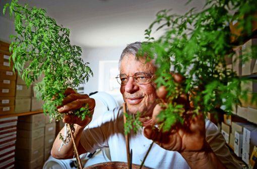 Streit um Arzneipflanze Artemisia wieder vor Gericht