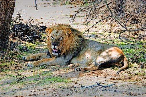 Begegnung in einem Nationalpark im Süden Sambias Foto: Roland Knauer