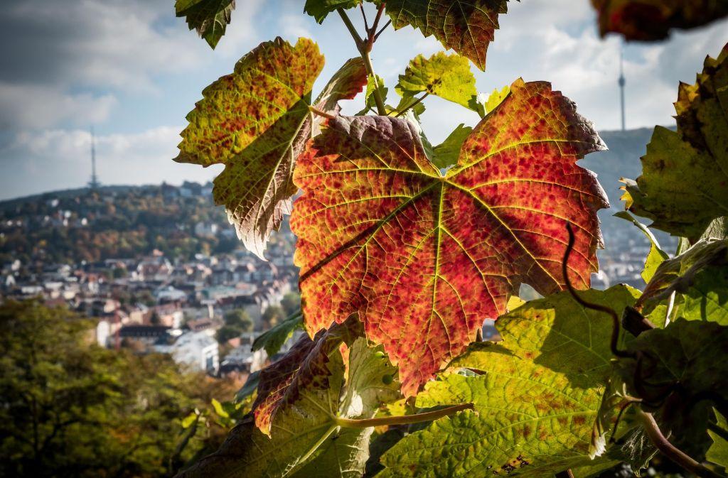 Der Herbst in Stuttgart beschert uns vom kommenden Wochenende an noch einmal warme und sonnige Tage. Foto: Lichtgut/Achim Zweygarth