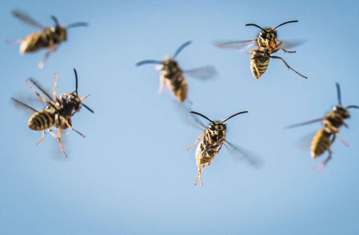 Nicht nur das Wespen-Nest wurde bei der Aktion des 36-Jährigen zerstört. Foto: dpa/Frank Rumpenhorst