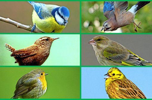 Frühlingserwachen und Vogelgezwitscher