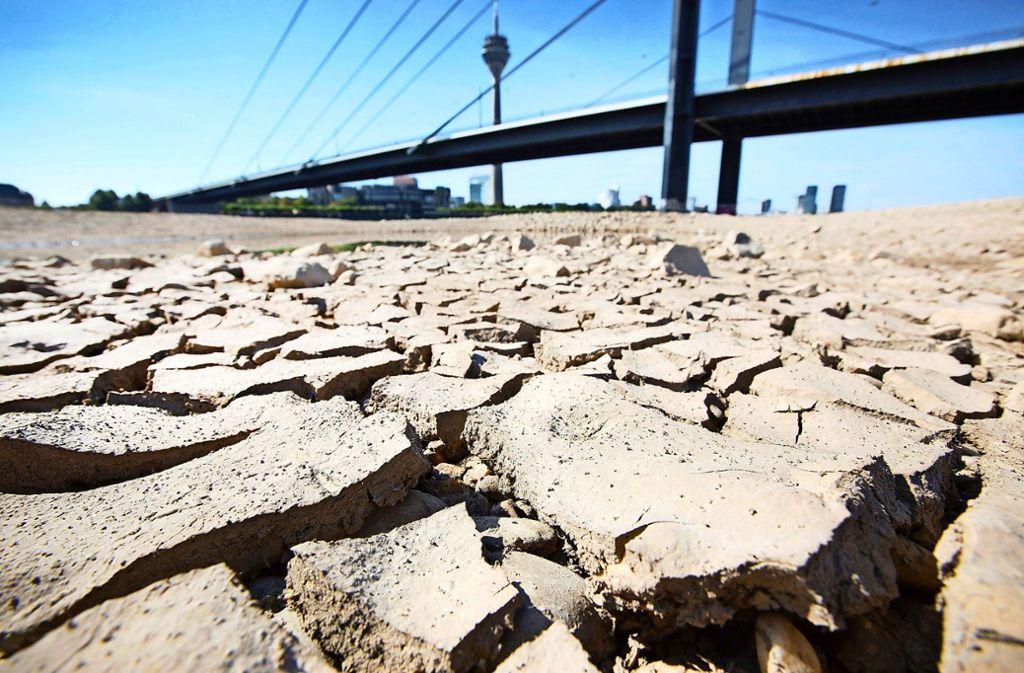 Trockenheit am Ufer des Rheins in Düsseldorf im Sommer 2018. Vermehrte Dürren beschäftigen derzeit die Weltklimakonferenz in Madrid. (Archivbild) Foto: dpa/Martin Gerten