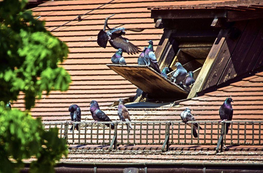 Im Dachstuhl  der  Leonhardskirch Foto: Lichtgut/Christoph Schmidt
