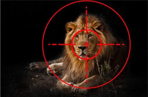 Löwen werden Köpfe und Pfoten abgehackt