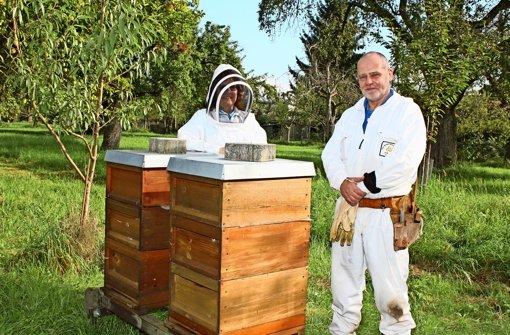 In diesem Jahr ist Honig rar