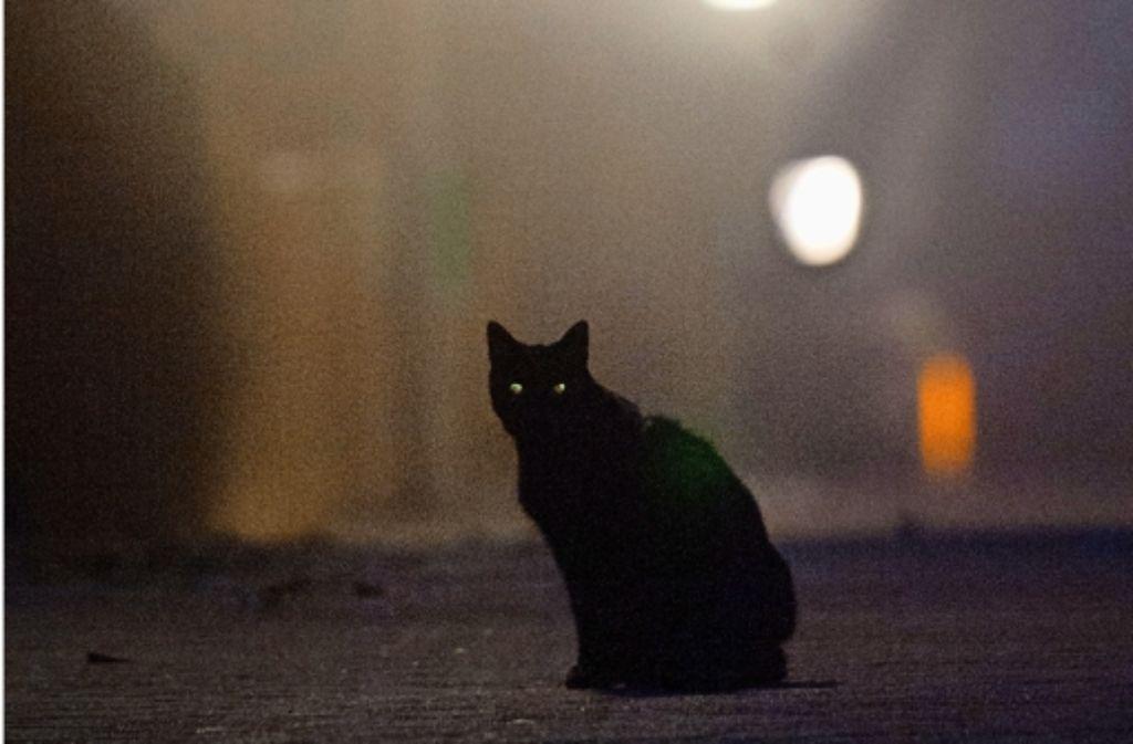 """Das Problem """"Killmousky"""": ein schwarzer Kater und viele offene Fragen Foto: dpa"""