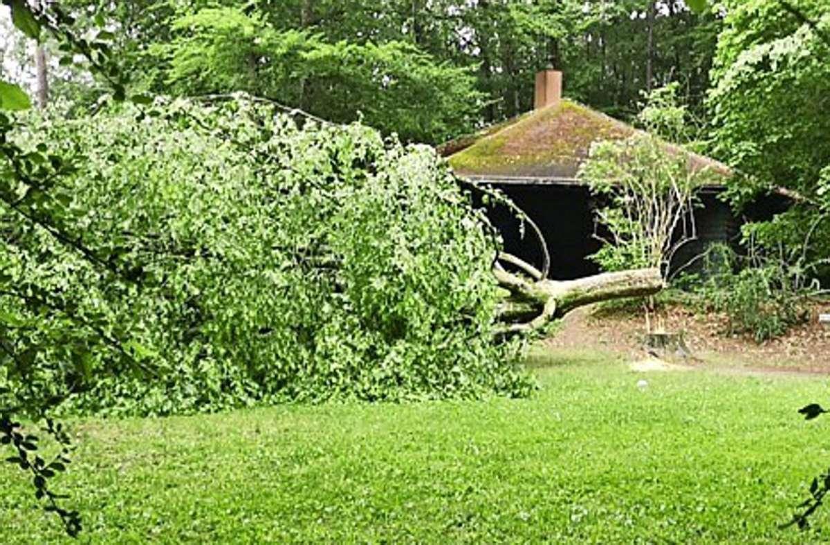 Mutwillig und illegal ist der Baum an der Waldhütte gefällt worden. Foto: Stadt Ditzingen