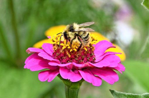 Start-up-Unternehmen will Bienen zählen