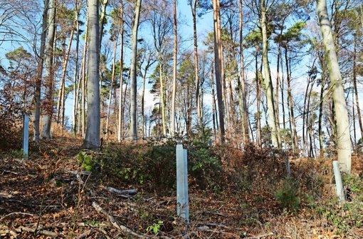 Kein Nabu-Siegel  für den Stadtwald