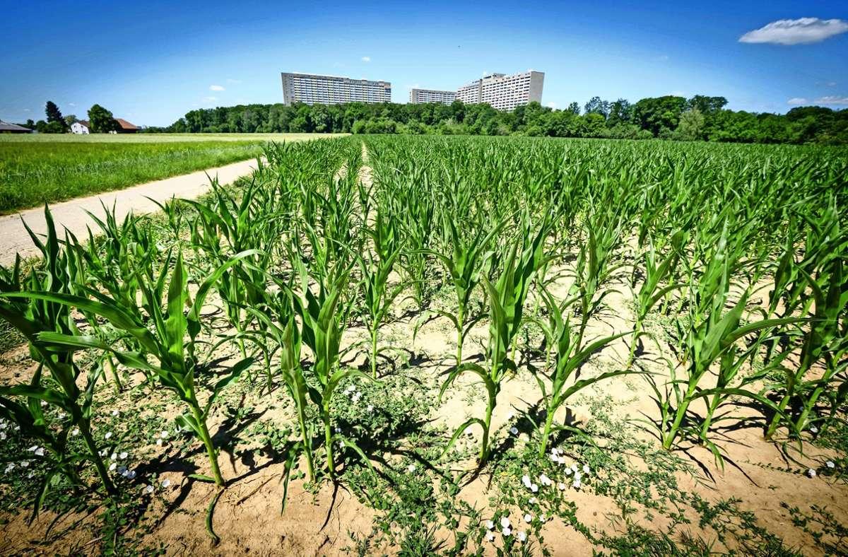 Das Birkacher Feld ist Naherholungsgebiet und landwirtschaftlich genutzte Fläche. Foto: Lichtgut/Achim Zweygarth