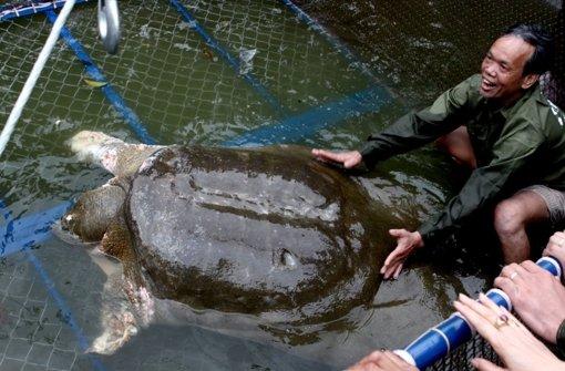 Vietnam trauert um Schildkröte