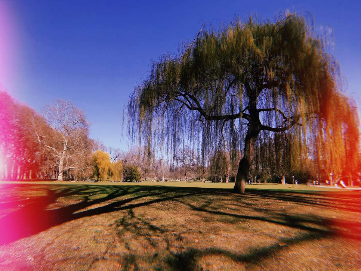 Bock auf einen Walk in the Park? Dann kommt mit uns auf einen Feierabend-Spaziergang im Unteren Schlossgarten. Foto: Tanja Simoncev