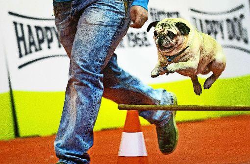 Was Hundchen zum Glücklichsein so  braucht