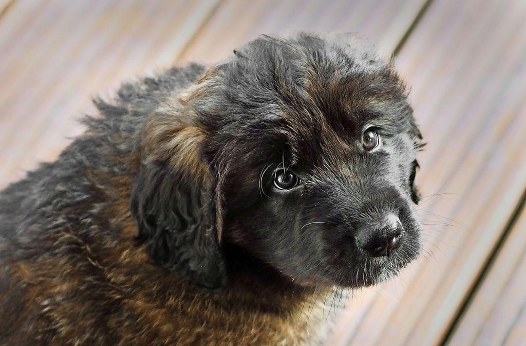 We möchte dieser süßen Hundedame ein Zuhause geben? Foto: Kaisser