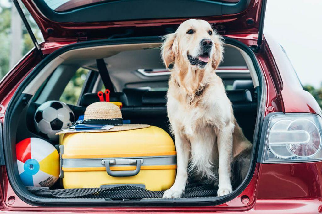 Mit diesen Tipps werden Sie den Hundegeruch los.  Foto: LightField Studios / shutterstock.com