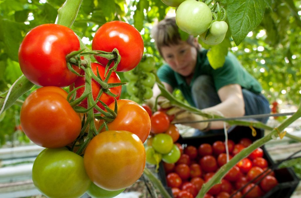 Für die richtige Konsistenz des Chutneys sollten die Tomaten nicht zu reif, sondern besser fest sein. Foto: dpa