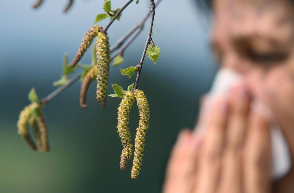 Pollen von Birken und anderen Pflanzen machen Allergikern zu schaffen. Foto: dpa
