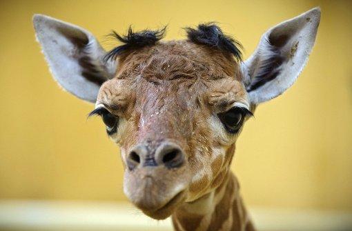 Gleich zwei Geburten entzücken Tierfreunde