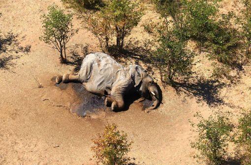 Cyanobakterien Grund für Elefanten-Sterben in Botsuana