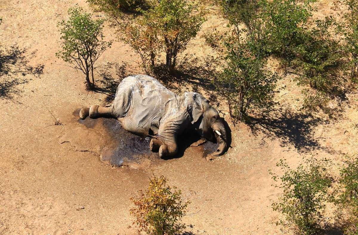 Ein toter Elefant liegt in einem Gebüsch. Die Behörden in Botsuana haben Bakterien als Ursache für ein Massensterben von Elefanten festgestellt. Foto: Uncredited/hons/AP/dpa