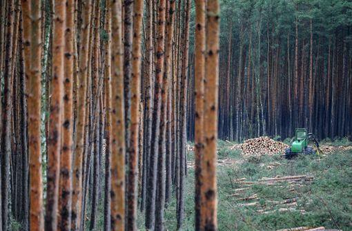 Peter Altmaier begrüßt Rodung –  Umweltschützer auf Bäumen