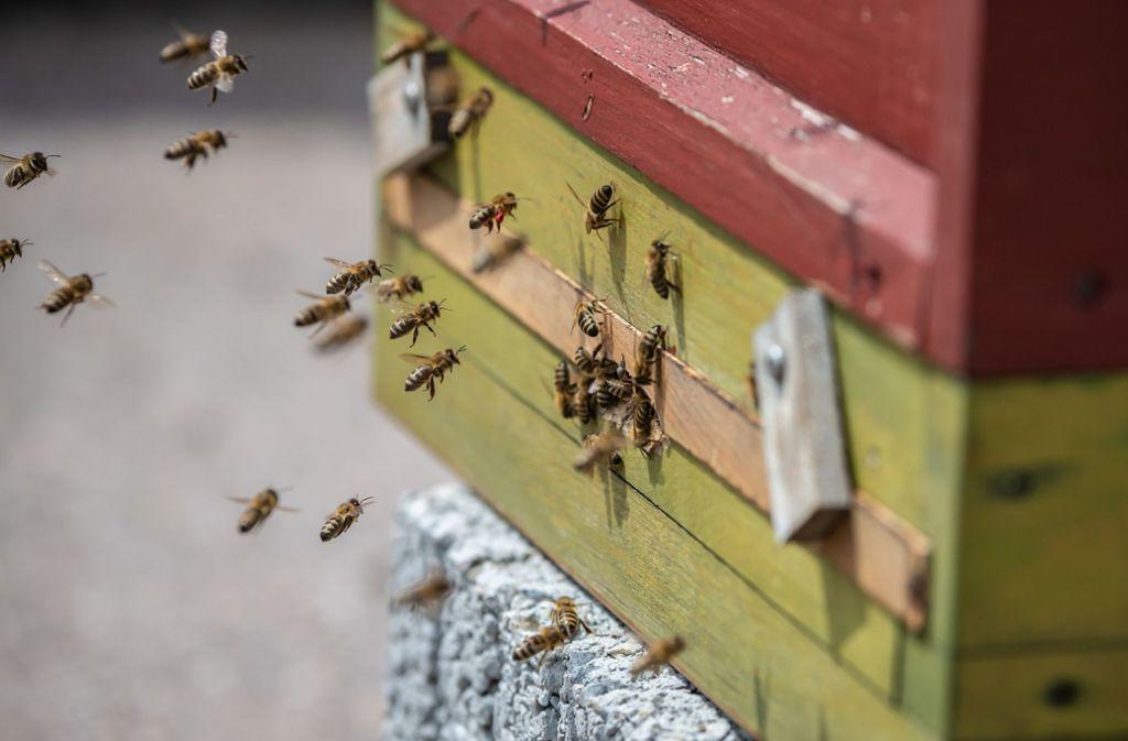 """Ein Bienenstock   der Imkerei Summtgart. Am 19. Mai 2019 wurde im Umfeld des Urban-Gardening-Projekts auf dem Dach des Züblin-Parkhaus die Auftaktveranstaltung für das Volksbegehren """"Rettet die Bienen in Baden-Württemberg"""" abgehalten. Foto: Lichtgut/Julian Rettig"""