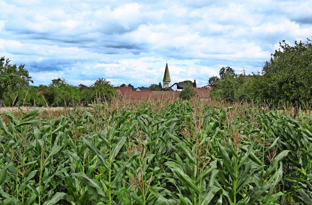 Plieninger Landwirte wollen, dass Äcker, die der Stadt Stuttgart gehören, nur an Stuttgarter Bauern verpachtet werden. Foto: Archiv Regine Warth