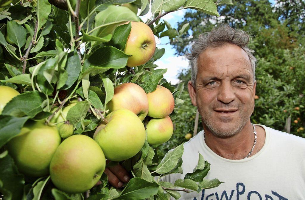 In voller Reife mit roten Bäckchen: Markus Nanz vom gleichnamigen Obsthof begutachtet die Äpfel in seiner Plantage am Uhlbacher Berg. Die Bäume hängen voller Früchte. Foto: Mathias Kuhn