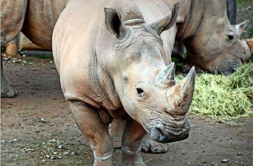 Zweijährige  in Zoo in Florida von Nashorn attackiert