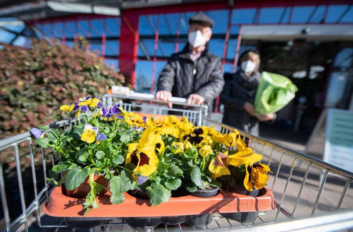 Lockerungen gibt es für Blumenläden und Gärtnereien – unter anderem. Foto: dpa/Sebastian Gollnow