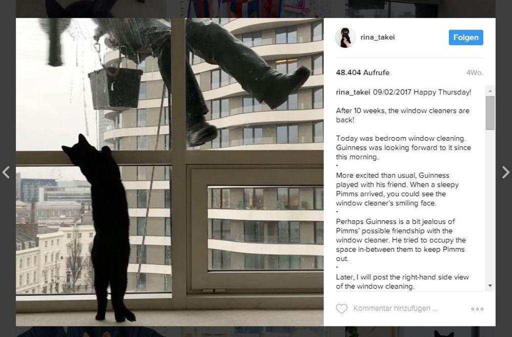 Kater Guinness verfolgt den Fensterputzer nicht nur mit den Augen. Foto: Screenshot Instagram /  Rina_Takei