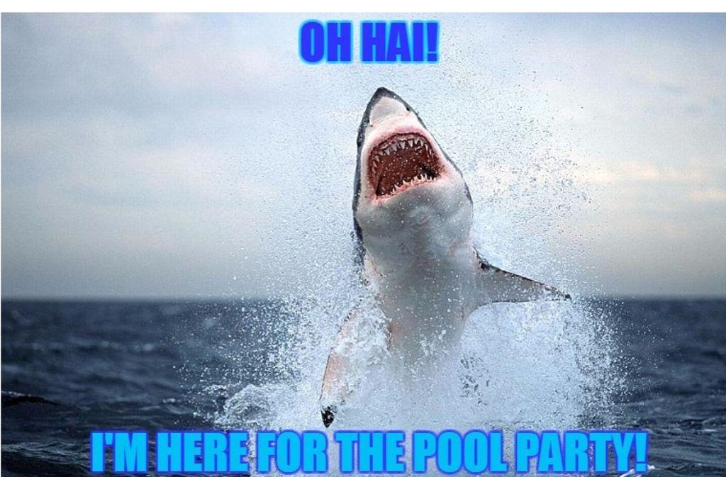 Ein riesiger Weißer Hai springt in False Bay (Cape Town, Südafrika) wie ein Blitz aus dem Wasser. Foto: AP/Meme