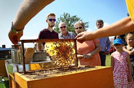 Ein Blick hinter die Kulissen der Honigproduktion
