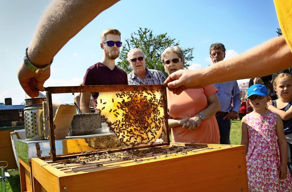 Die Besucher bestaunen das Innenleben der Bienenkästen. Foto: Ines Rudel