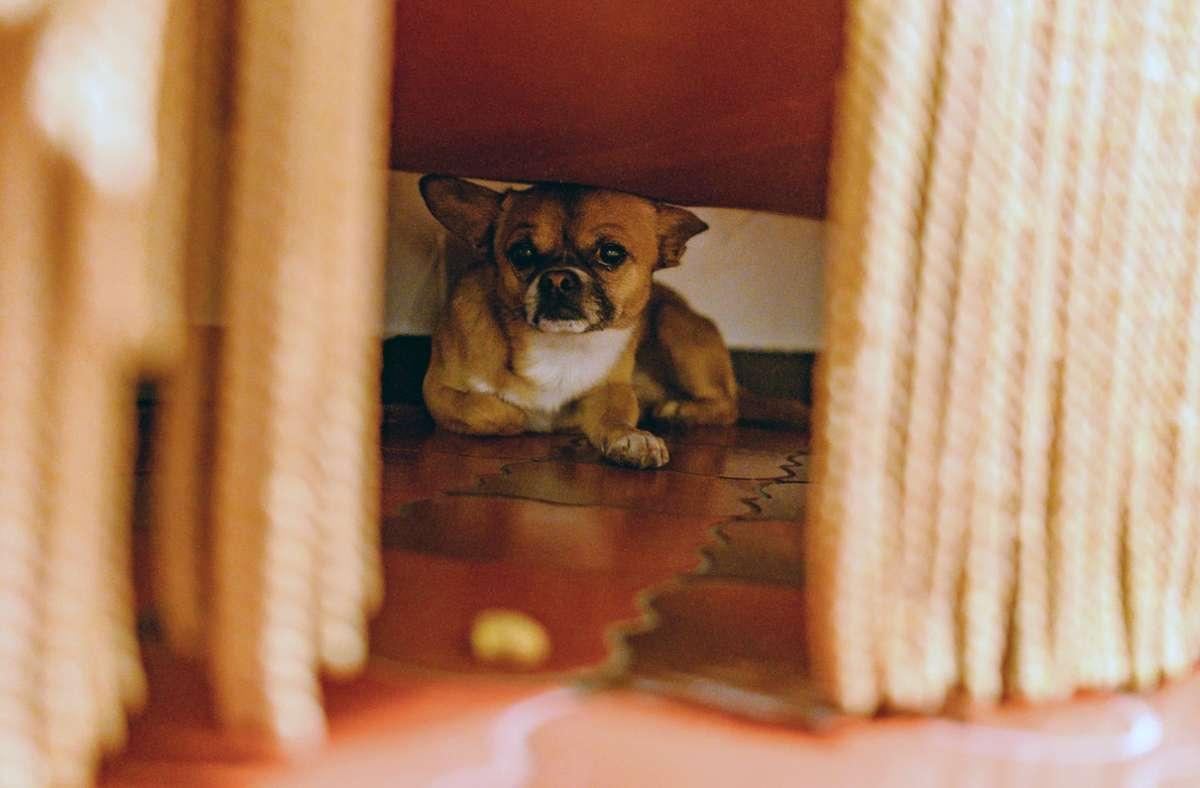 Lärm lässt viele Tiere panisch werden. Mit etwas Vorbereitung können Halter den Stress am bundesweiten Warntag aber wenigstens abmildern. Foto: Daniel Maurer/dpa-tmn