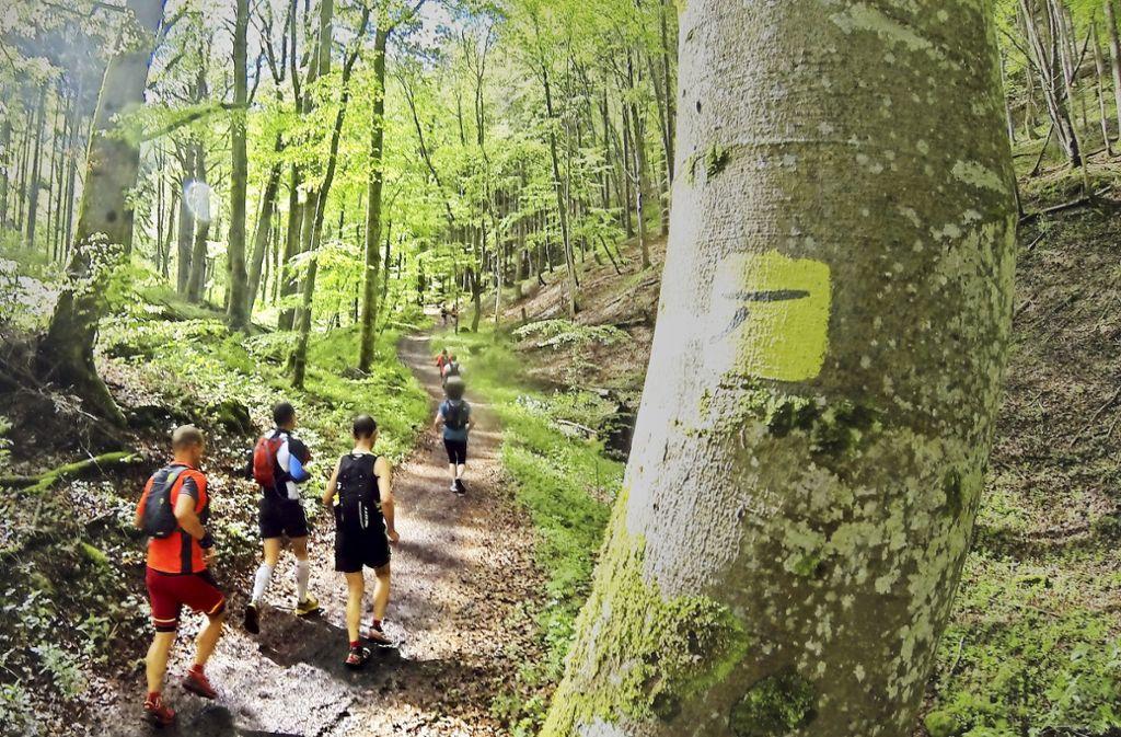 Beim Ultra-Trail geht es mitten durch die herrliche Alb-Landschaft. Foto: Privat