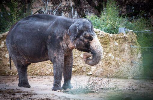 Sieben Elefanten sterben durch Stromschlag
