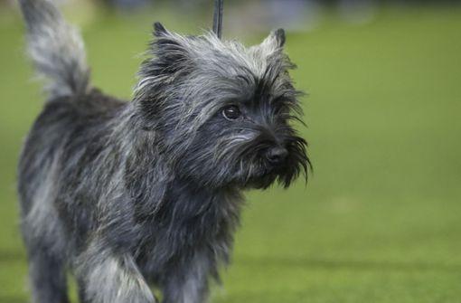 Spaziergängerin findet gehäuteten Hundekadaver
