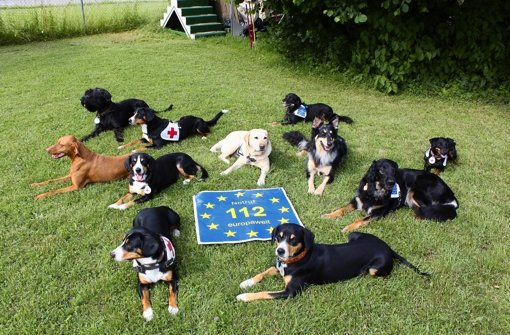 Als erste Rettungshundebereitschaft in Deutschland macht das Weilimdorfer Team seit kurzem auf die europaweit einheitliche Notfallnummer aufmerksam. Foto: privat