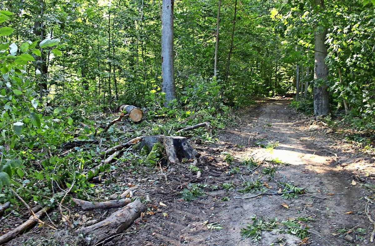 Nach der Rodung macht der Wald am Gorch-Fock-Weg in Sillenbuch Anfang August einen martialischen Eindruck Foto: Caroline Holowiecki