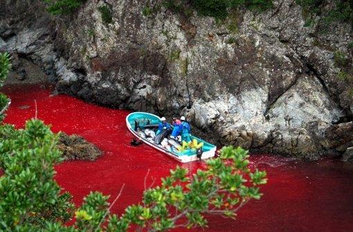 Delfine werden gnadenlos abgeschlachtet