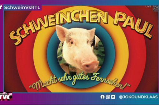 Schweinchen Paul im Rennen gegen RTL-Sommerhaus
