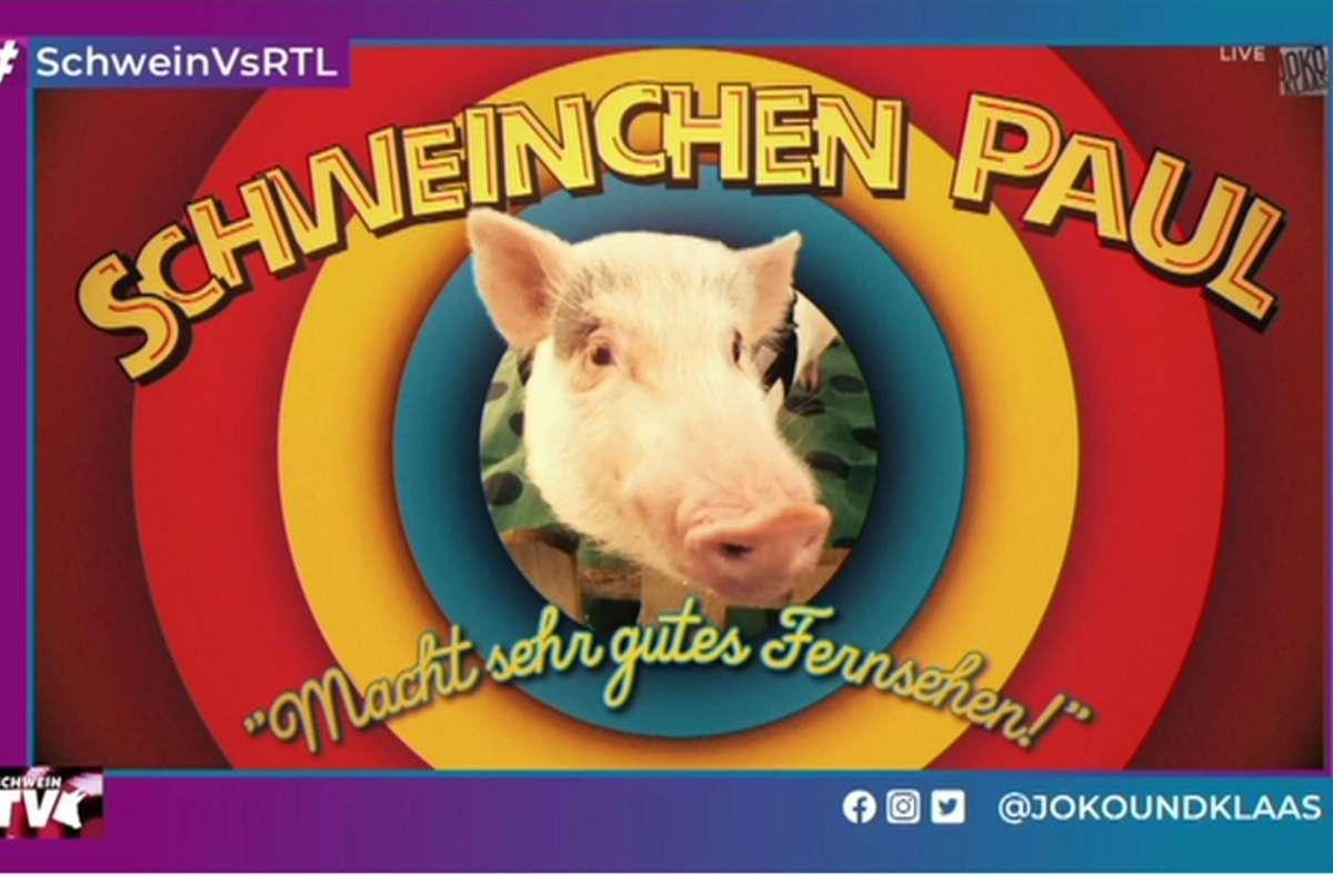 Ein Schwein soll für saugute Einschaltquoten sorgen: Joko und Klaas ließen die Sau in einer  Kunstgalerie raus. Foto: Twitter/@jokoundklaas