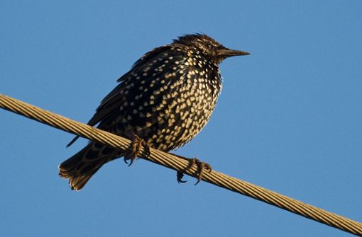 Erste Zugvögel kehren laut Nabu zurück