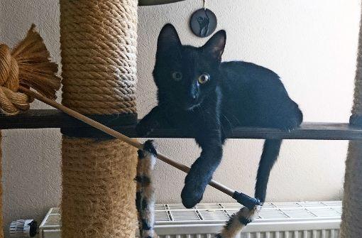 Katzenhilfe wünscht sich die Kastrationspflicht