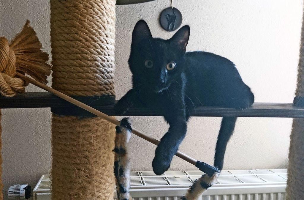 Mercedes ist, wie 70 weitere Katzen, noch auf der Suche nach einem neuen Zuhause Foto: Wiebke Wetschera