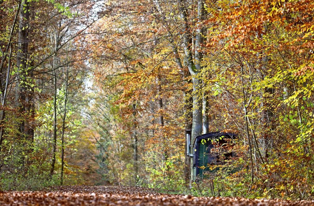 In dem  Staatswaldstück namens Wasserbach hat schon der Herzog Karl anno 1748 gerne gejagt. Foto: factum/Simon Granville