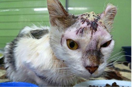 Kastration gegen Katzenplage und Katzenleid