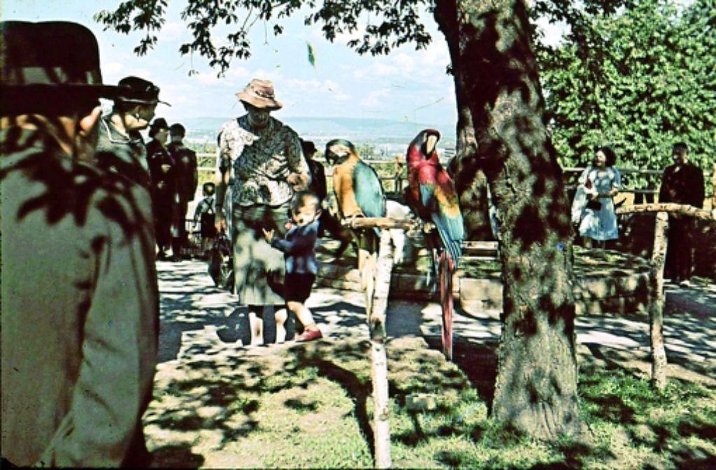 ... dieses Foto. Die Reichsgartenschau ist 1939 wegen des Kriegsbeginns am 1. September vorzeitig geschlossen worden. Foto: Von Zeit zu Zeit – Ellen Matern