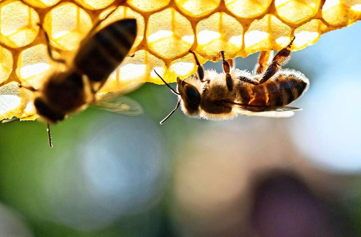 """In der erweiterten """"Honigstube"""" soll es natürlich Honig geben, aber auch noch andere regionale Produkte. Foto: dpa//Sebastian Gollnow"""